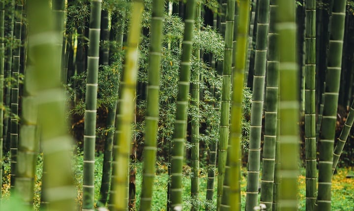 Is bamboo water the next super drink?