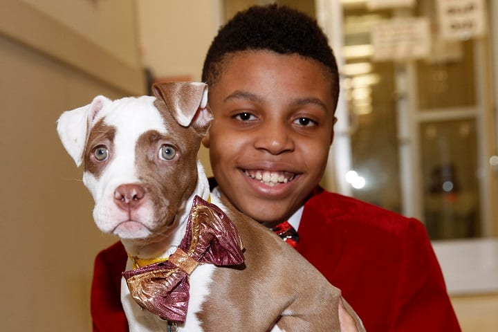 This incredible boy is creating bowties to make shelter animals spiffy for adoption