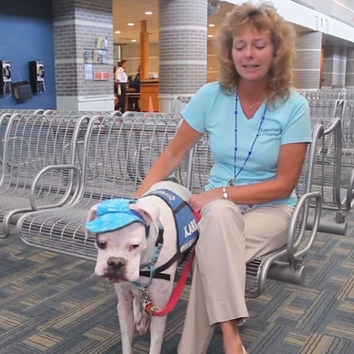Karl and Joanne, trainer, handler, therapy dog