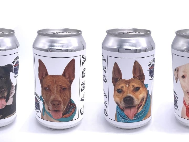 dogs, cans, adopt a dog
