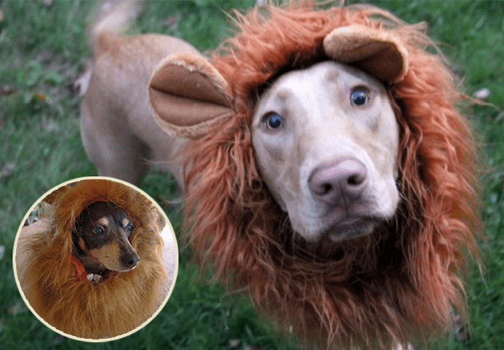 Rwm Dog Lion Mane Costume