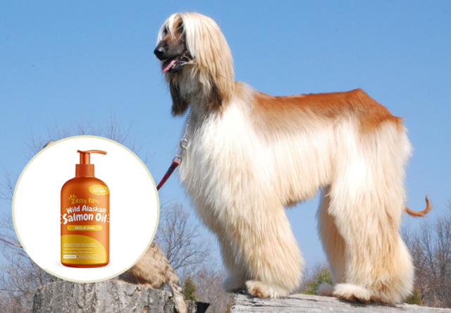 Pure Wild Alaskan Salmon Oil for Dogs & Cats