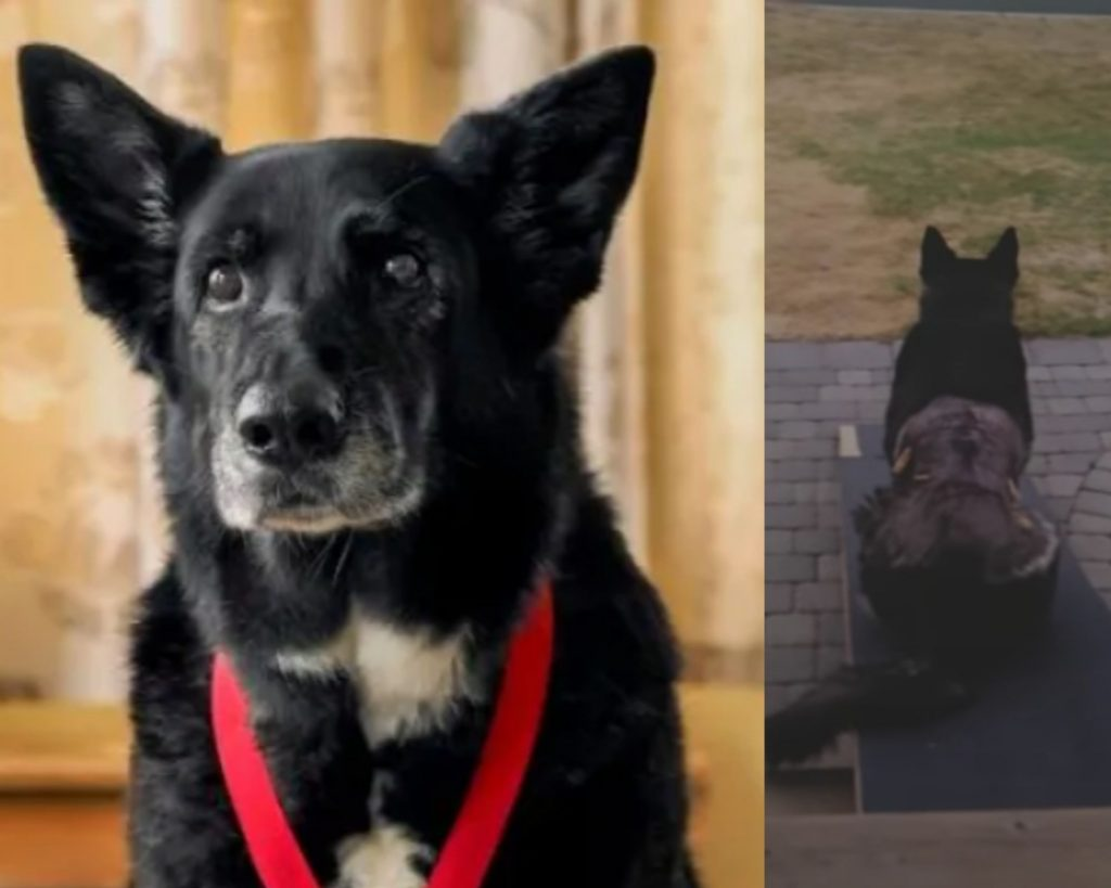 Shelby the Dog saved her owner from a bear attack
