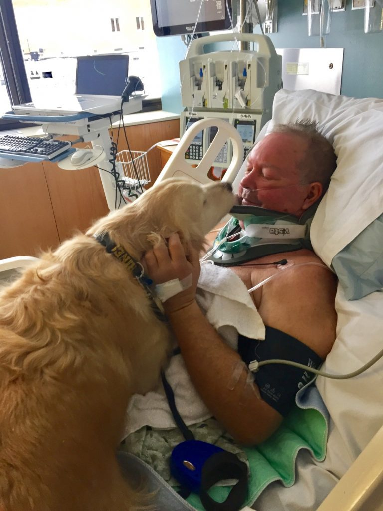 dog-rescues-pateint-ice-hosptial-today-170112-1187782
